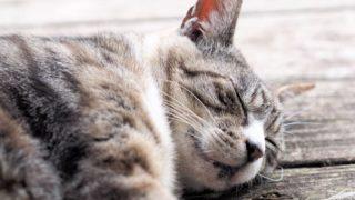 縁側で眠る猫