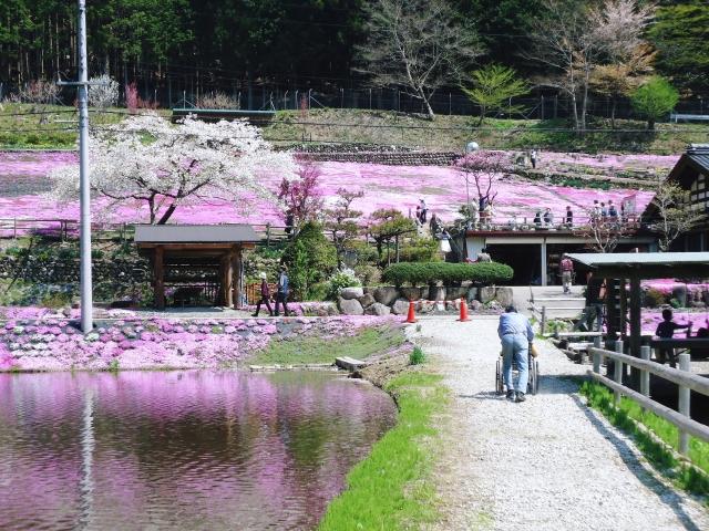 芝桜の散歩道